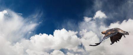 Blue sky and flaying eagle photo
