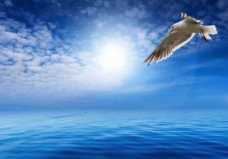 untroubled: Blue sky and flaying seagull Stock Photo