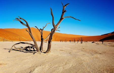 arboles secos: �rboles muertos en Dead Vlei - Sossusvlei, Namib, Namibia.  Foto de archivo