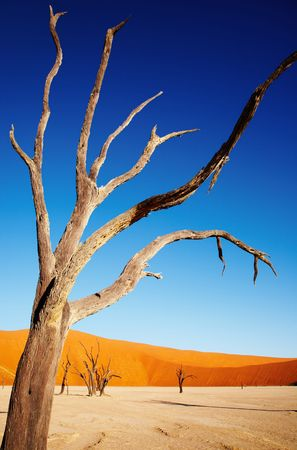 sossusvlei: Dead tree in Dead Vlei - Sossusvlei, Namib Desert, Namibia  Stock Photo