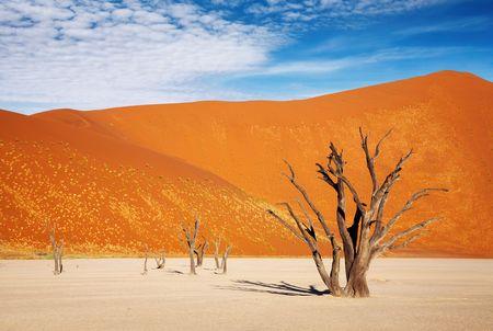 parch: Dead trees in Dead Vlei - Sossusvlei, Namib Desert, Namibia