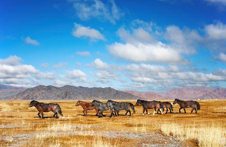 Herd of horses in mongolian desert Stock Photo - 2632756
