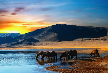 oasis at sunrise: Herd of horses in mongolian wilderness Stock Photo