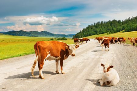 melker: Landschap met koeien en gras land
