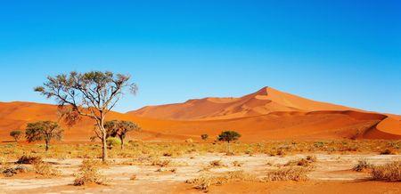 parch: Namib Desert, Sossusvlei, Namibia