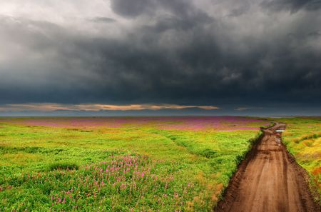 Blossoming field and country road photo