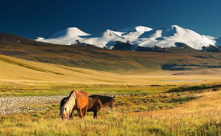 Landscape with grazing horses and snowy mountains photo
