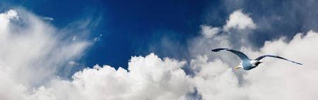 untroubled: Seagull flying in cloudy sky Stock Photo