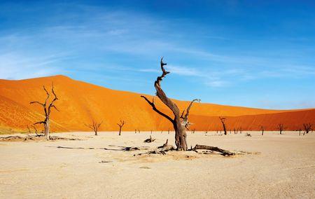 Árbol muerto en Dead Vlei - Sossusvlei, Namib, Namibia  Foto de archivo
