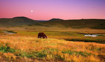 Landscape with grazing horses at sunset Stock Photo - 3127699