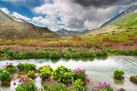 river stones: Mountain valley with blooming flowers
