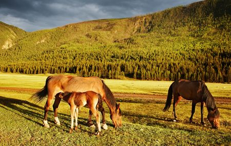 Mountain grassland with grazing horses at sunsetr photo