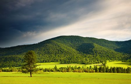 Landscape with forest and cloudy sky Stock Photo - 3371099