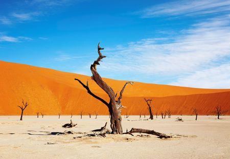 vlei: Dead tree in Dead Vlei - Sossusvlei, Namib desert, Namibia