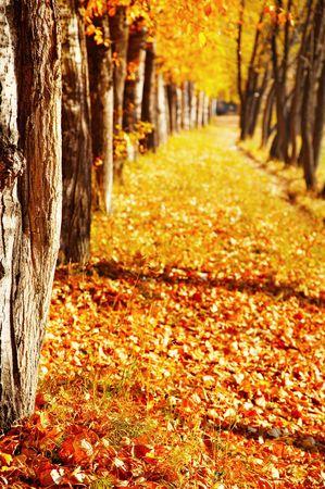 Autumn trees, shallow depth of field Stock Photo - 3701960