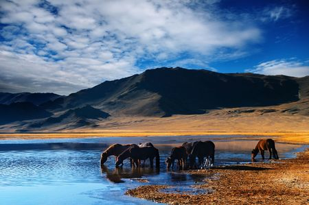 clarity: Mountain landscape with drinking horses