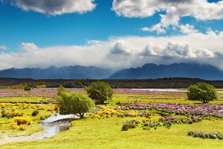 Landscape with blooming field and mountains, New Zealand photo