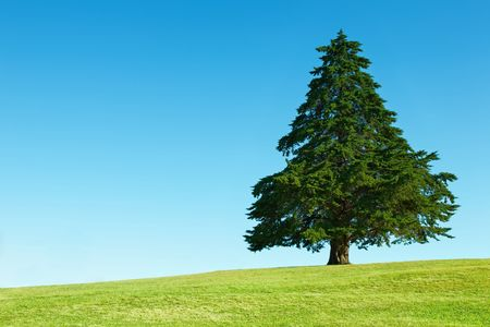 cloudless: Lonely tree on green field against blue sky background Stock Photo