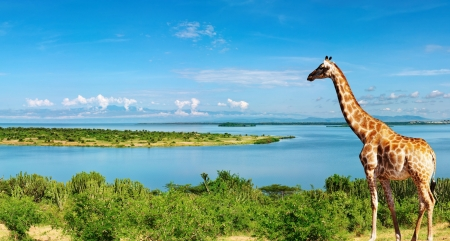 African landscape with Nile River and giraffe Stock Photo
