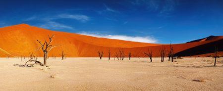 parch: Dead tree in Dead Vlei, Sossusvlei, Namib Desert, Namibia