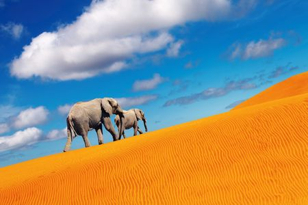 Desert landscape with sand dunes and elephants