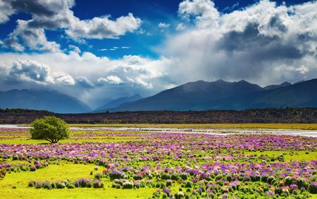 Landscape with mountains and blossoming field, New Zealand Stock Photo - 4665634