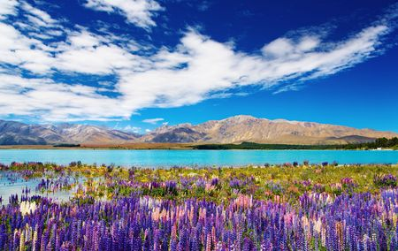 zealand: Mountain landscape with lake and flowers, New Zealand