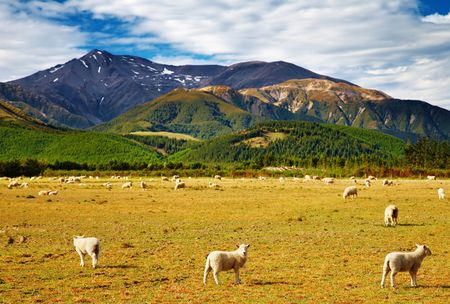 Mountain landscape with grazing sheep, New Zealand Stock Photo - 4665624