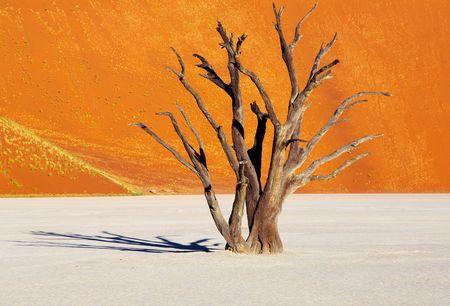 parch: Dead tree in Dead Vlei - Sossusvlei, Namib Desert, Namibia  Stock Photo