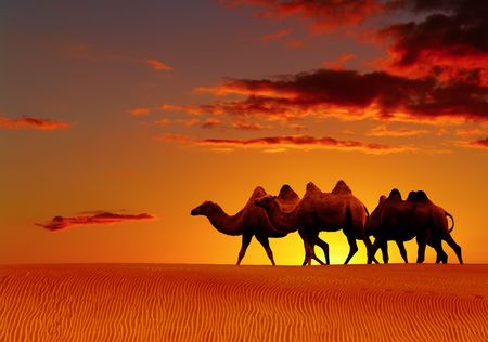 Desert landscape with walking camels at sunset