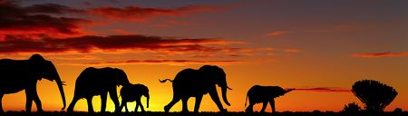 Elephants silhouettes in night savanna
