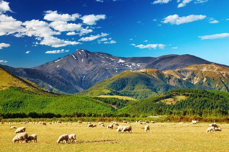 Mountain landscape with grazing sheep, New Zealand Stock Photo - 5271105