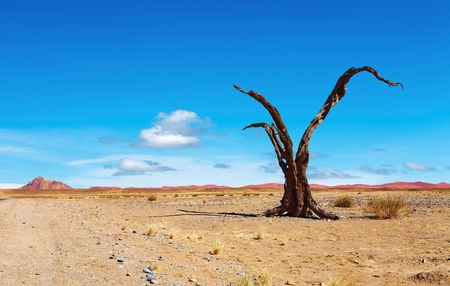Dead tree in Namib Desert, Namibia