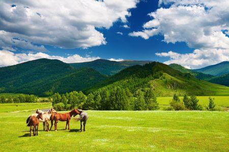 Paisaje de montaña con caballos de pastoreo Foto de archivo