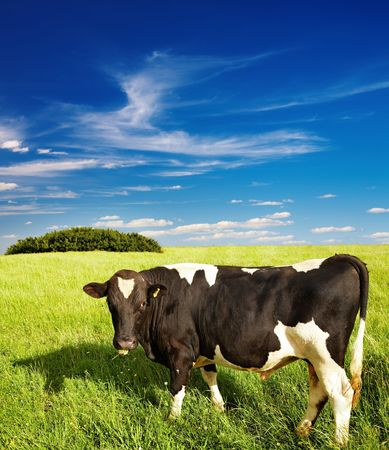 Rural landscape with grazing cow and blue sky Stock Photo - 5408199