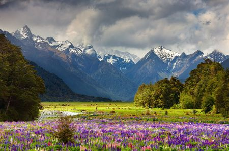 Mountain landscape with blossoming field, New Zealand photo