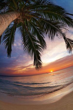 Tropical beach, Chang island, Thailand, fisheye shot Stock Photo - 6173214