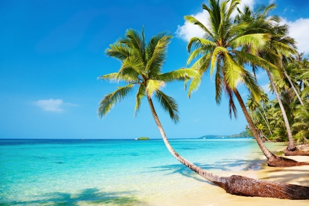 palmtrees: Tropical beach, Kood island, Thailand  Stock Photo