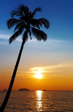 palm tree sunset: Palm tree silhouette at sunset, Chang island, Thailand  Stock Photo