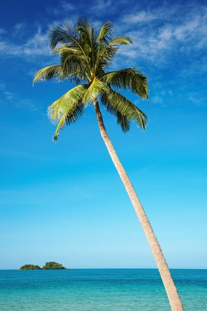Coconut palm against blue sky, Chang island, Thailand Stock Photo - 6227913