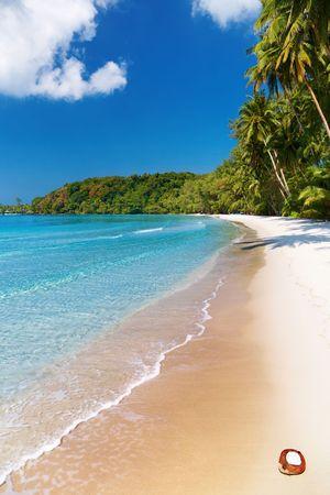 Coconut palms on the beach, Kood island, Thailand Stock Photo - 6298527