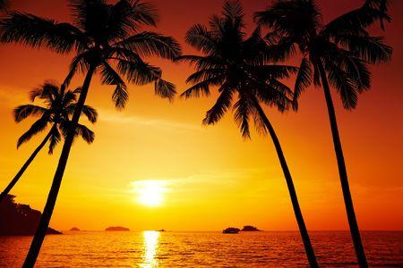getaways: Silueta de �rboles de Palma en la puesta del sol, isla de Chang, Tailandia  Foto de archivo