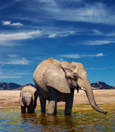 Mother and baby elephants at watering in african savanna  Stock Photo