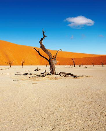 vlei: Dead trees in Dead Vlei - Sossusvlei, Namib Desert, Namibia Stock Photo