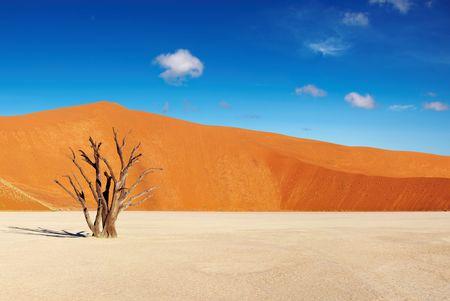 Dode boom in Dead Vlei - Sossusvlei, Namib woestijn, Namibië