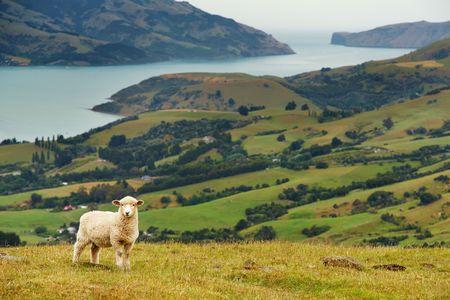 New Zealand landscape, Banks Peninsula Stock fotó