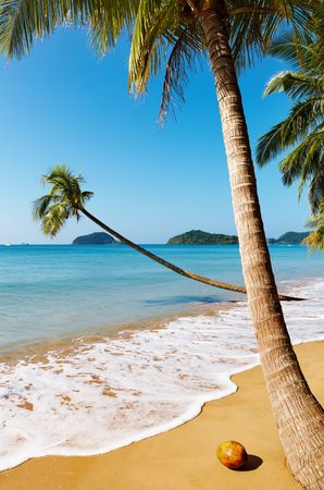 Tropical beach with palm trees, Mak island, Thailand Stock Photo - 6740992