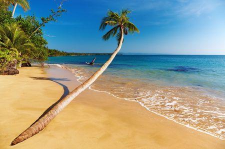 Tropical beach, coconut palm, Mak island, Thailand Stock Photo - 6884383