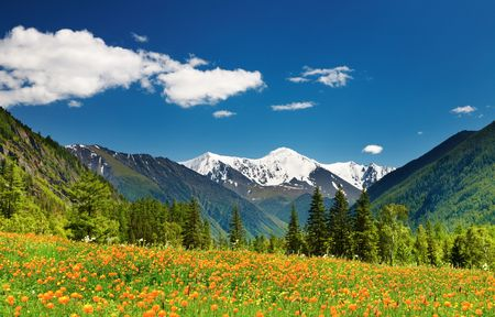landscape: Mountain landscape with blossoming field and blue sky  Stock Photo