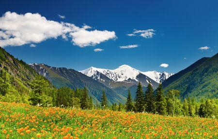 monta�as nevadas: Paisaje de monta�a con la floreciente campo y cielo azul  Foto de archivo